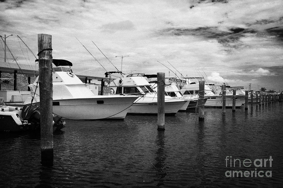 Charter Photograph - Charter Fishing Boats Charter Boat Row City Marina Key West Florida Usa by Joe Fox