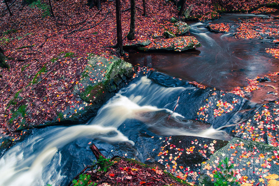 Leaves Photograph - Chesterfield Gorge New Hampshire by Edward Fielding