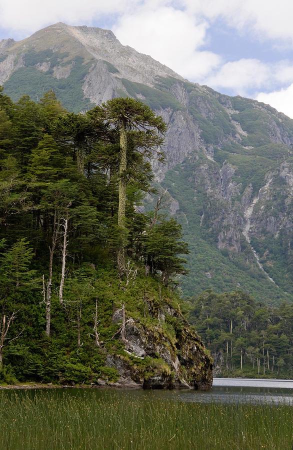 Alpine Photograph - Chile South America Lago El Toro by Scott T. Smith
