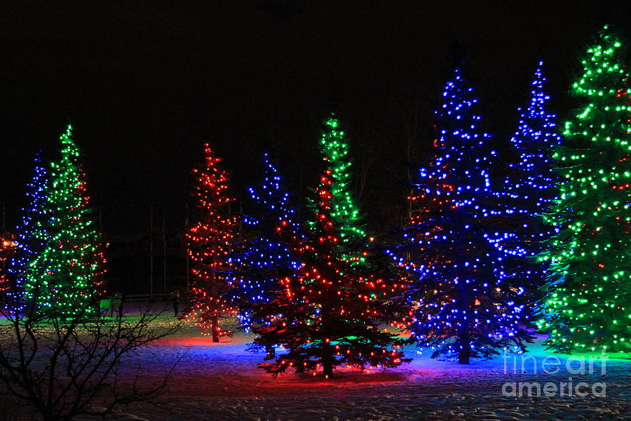 Christmas Photograph   Christmas Tree Lights By Helen Bobis