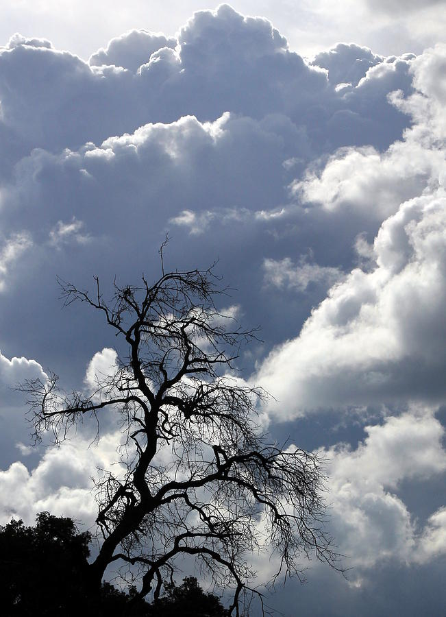 Clouds Photograph - Cloudscape by Ron Romanosky