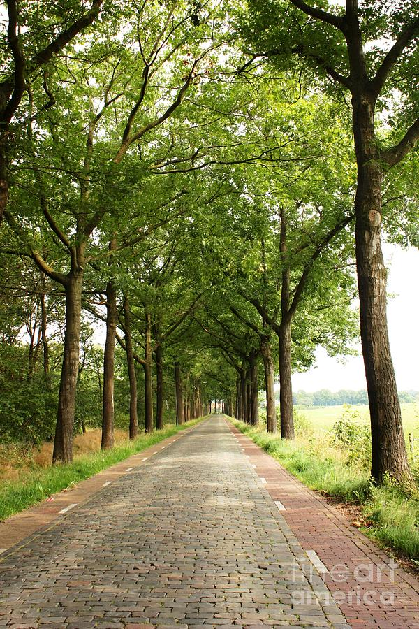Road Photograph - Cobblestone Country Road by Carol Groenen