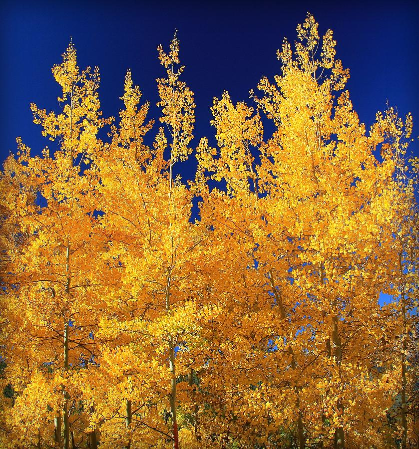 Colorado Photograph - Colorado Autumn by Danielle Marie