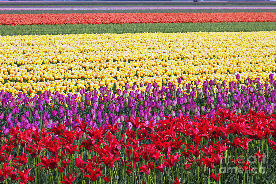 Holland Photograph - Colors Of Holland by Lars Ruecker