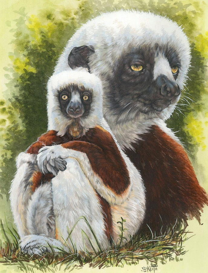 Sifaka Mixed Media - Coquette by Barbara Keith