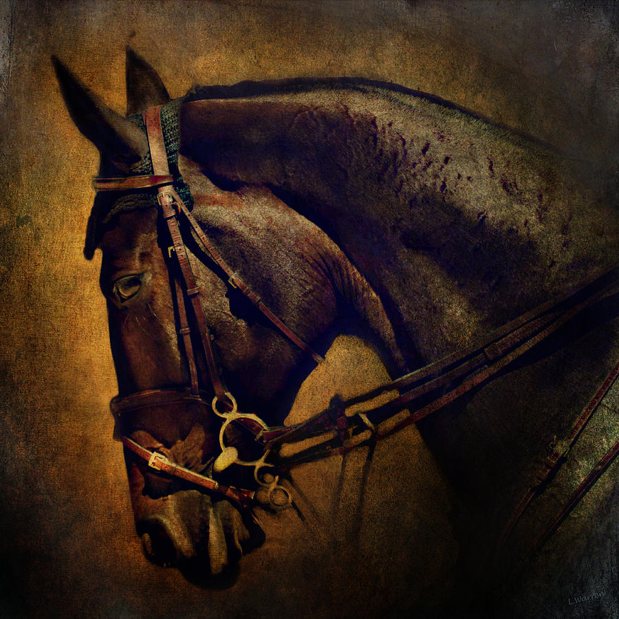 Horse Photograph - Cover Girl by Lyndsey Warren