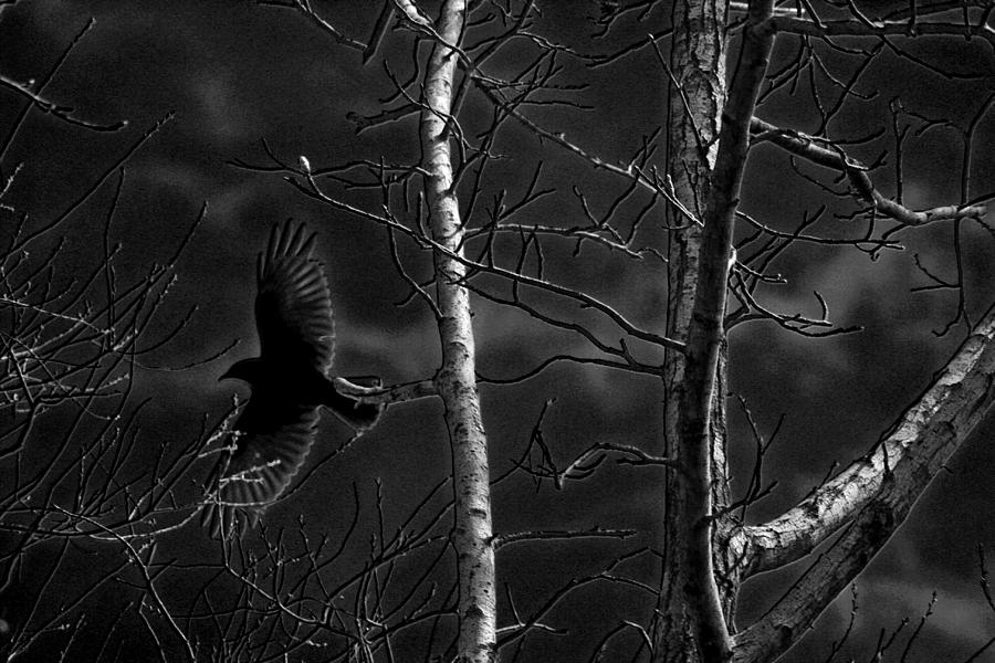 Crow Photograph - Crow Behind The Trees by Andy Lawless