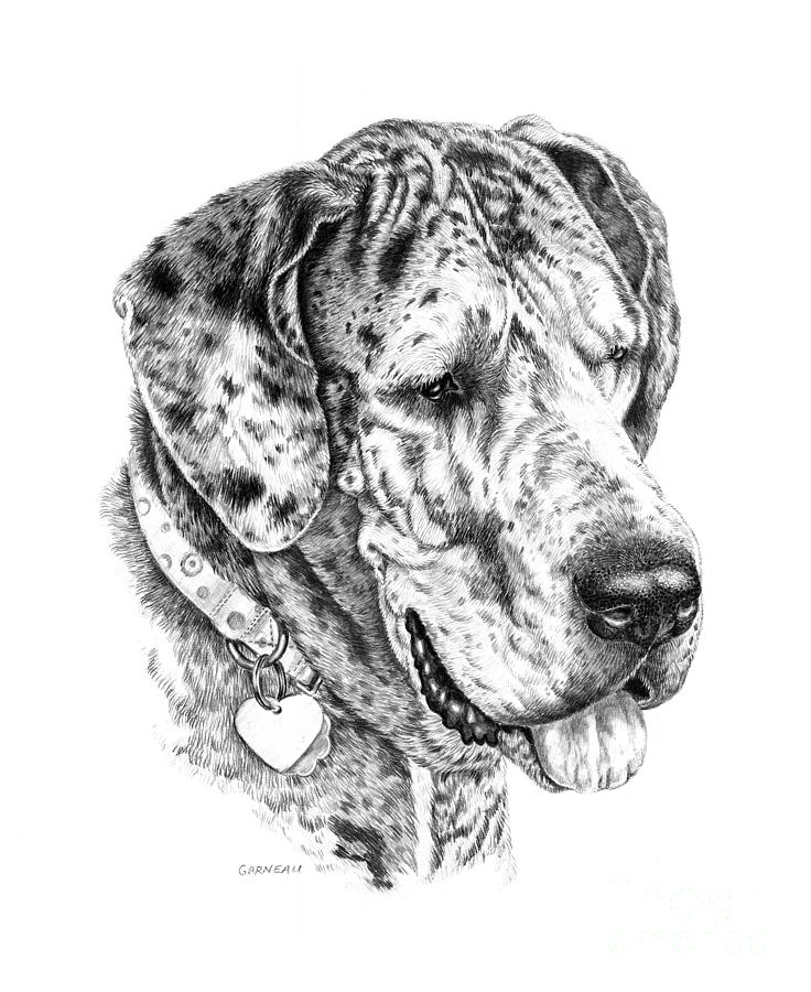 Merle Drawing - Daisy  by Catherine Garneau