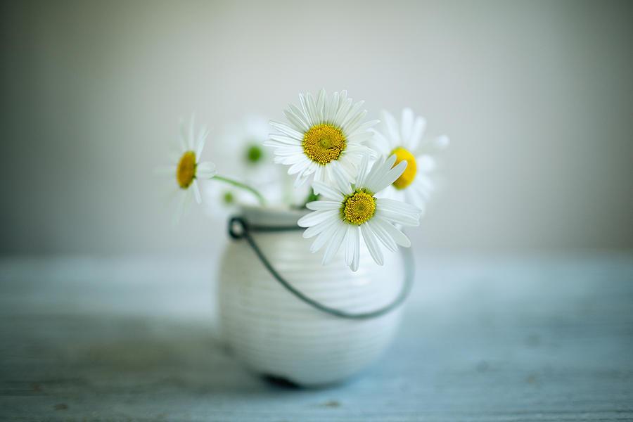Daisy Flowers Photograph