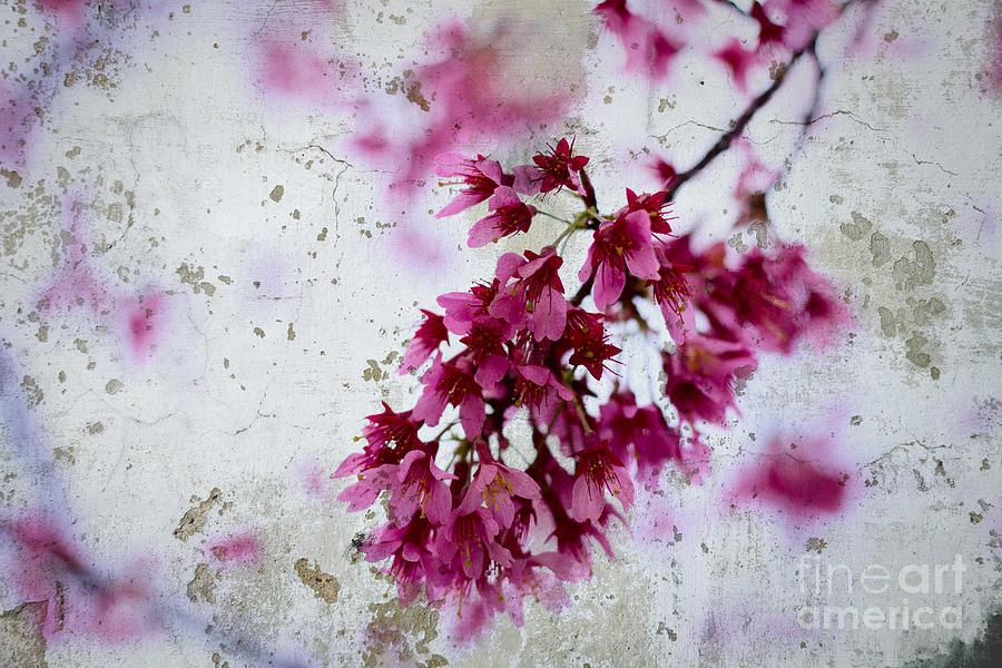 Deep pink flowers with grey concrete texture background photograph deep pink photograph deep pink flowers with grey concrete texture background by beverly claire kaiya mightylinksfo