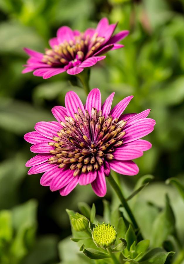 Flowers Photograph - Desert Flower by Pete Mecozzi