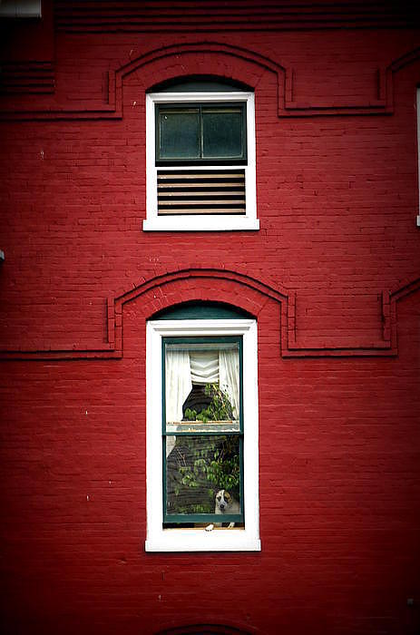 Dog Photograph - Doggie In The Window by Laurie Perry