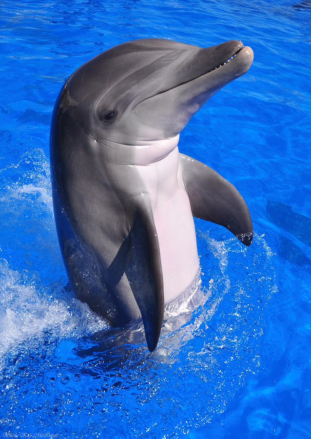 Dolphin at Play by Sheila Kay McIntyre