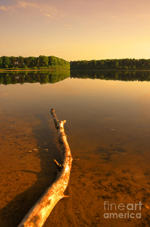 Bay Photograph - Drift Wood by Svetlana Sewell