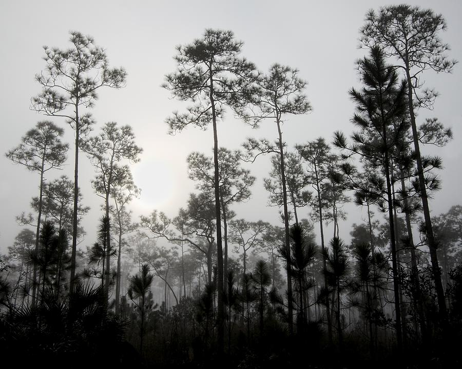 Everglades Photograph - Early Morning Fog Landscape by Rudy Umans