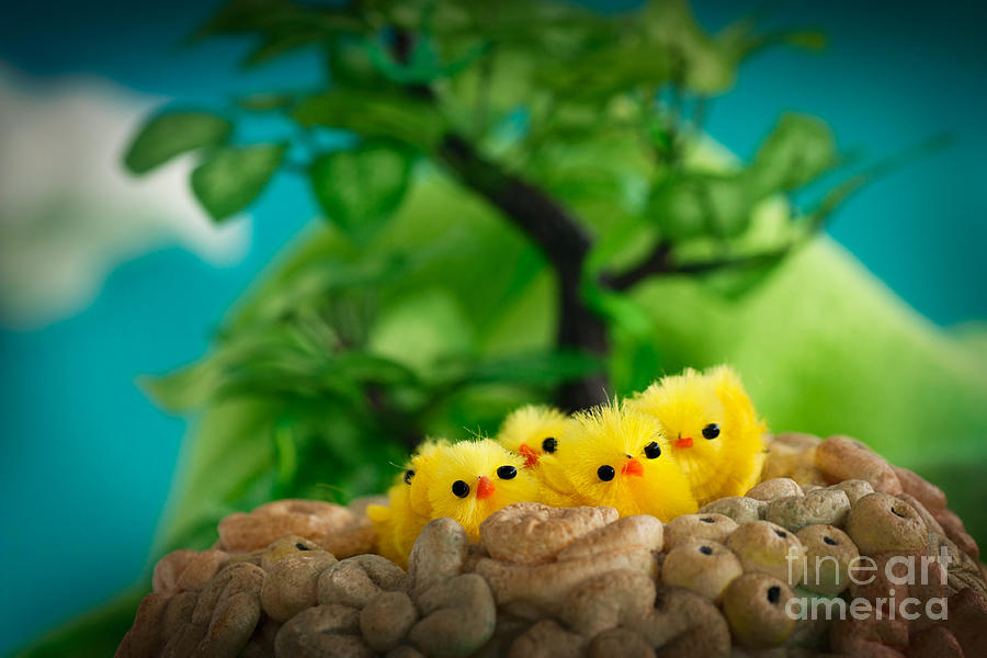 Adorable Photograph - Easter Chicks by Mythja  Photography