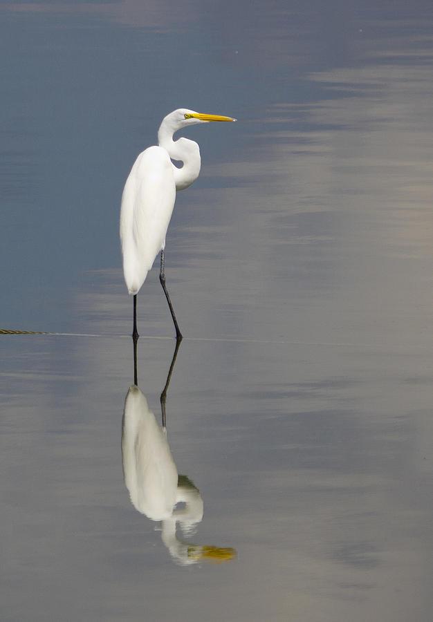White Photograph - Egret Standing by Brian Grzelewski