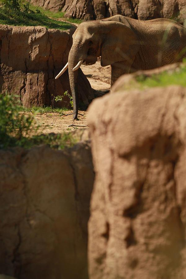 Nature Photograph - Elephant by Tinjoe Mbugus