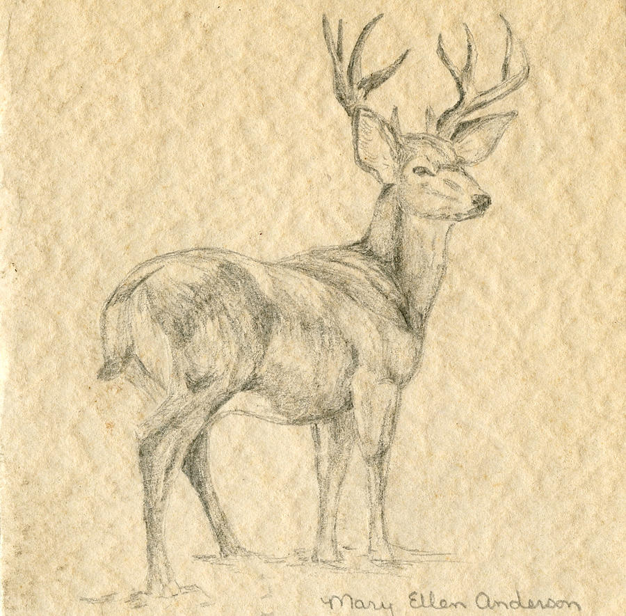 Drawing Drawing - Elk by Mary Ellen Anderson