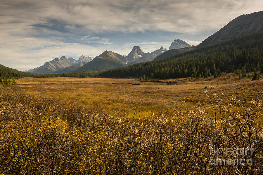 Autumn Photograph - Engadine Meadow by Ginevre Smith