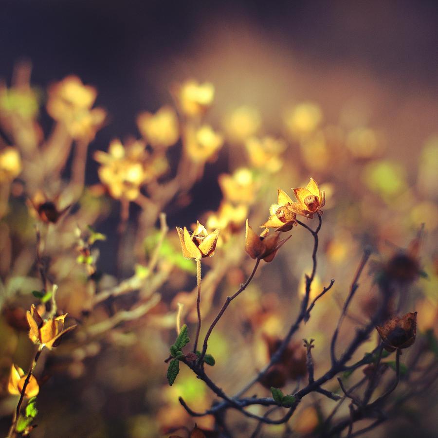 Floral Photograph - Every Desire by Taylan Apukovska