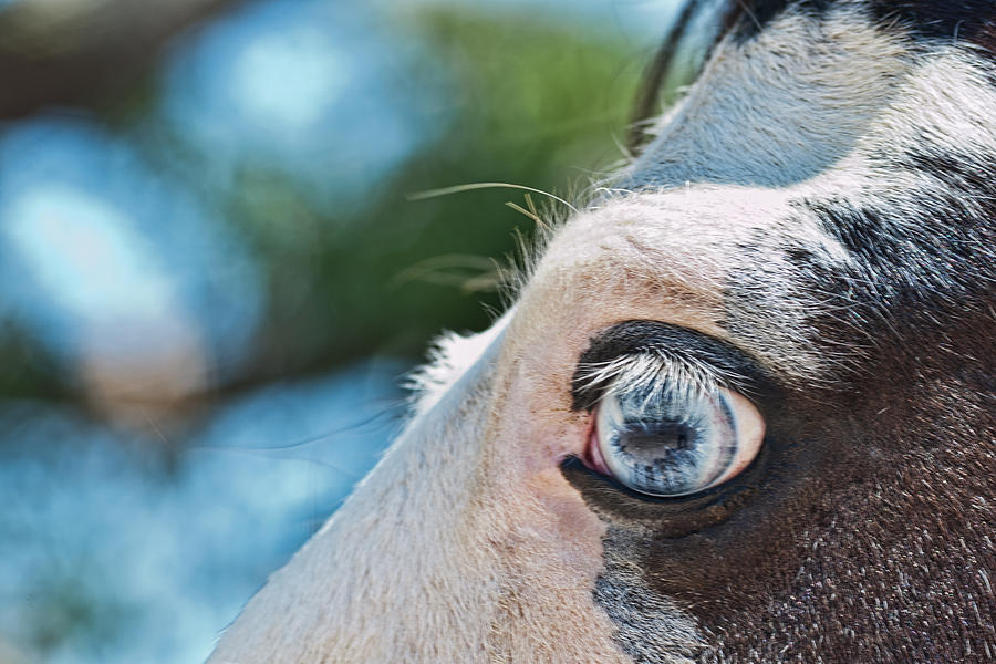 Horses Photograph - Eye Of The Beholder by Frank Feliciano