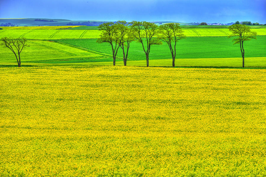 France Photograph - Fields Of Dreams by Midori Chan