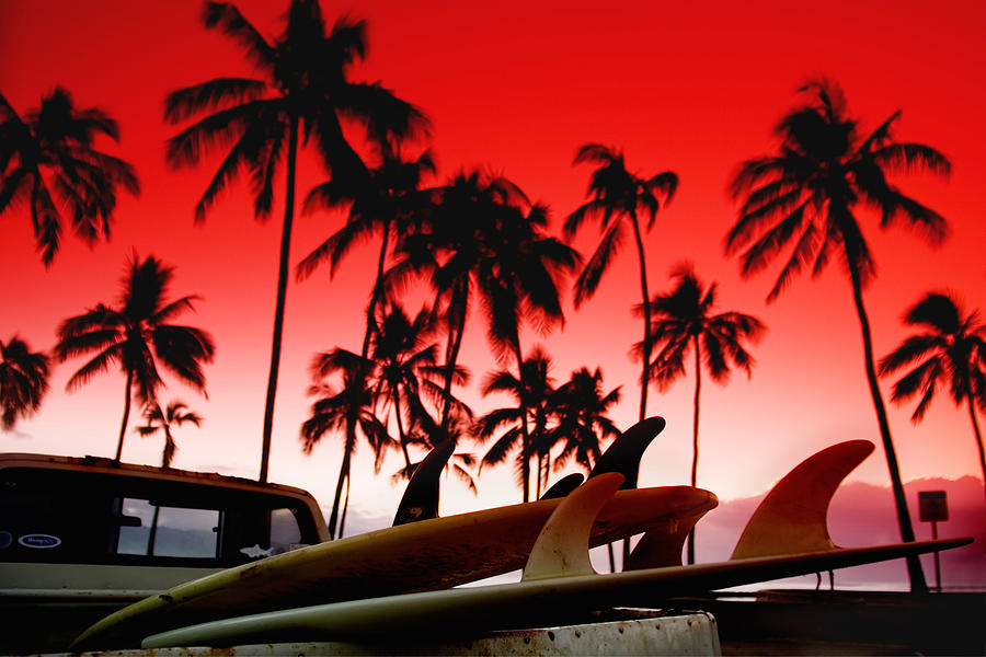 Red Sky Photograph - Fins N Palms by Sean Davey
