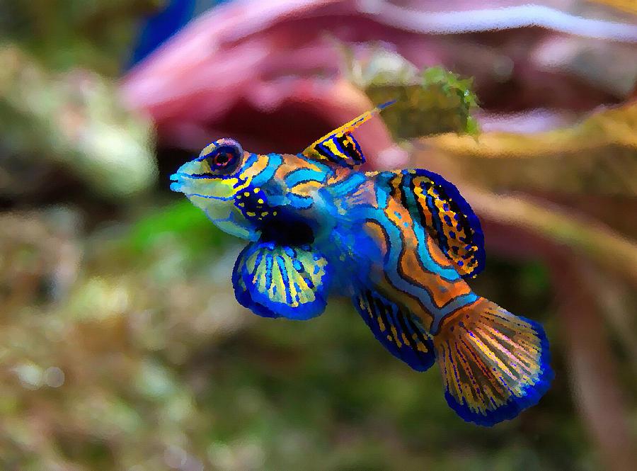 Fish Painting - Fish Paintings by Nicole Gardner