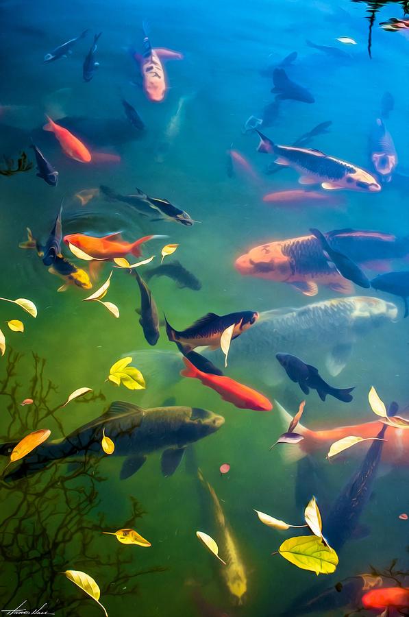 Fish Pond by Thomas Hall
