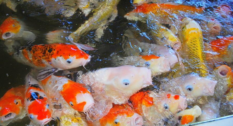 Fish Pyrography - Fish by Tonyah Nichols