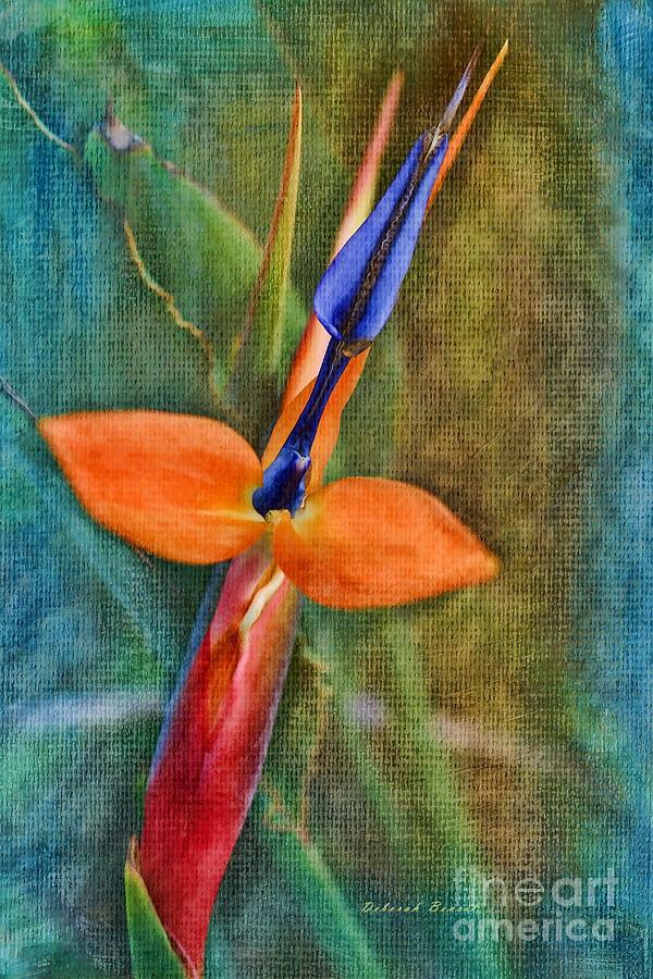 Floral Photograph - Floral Contentment by Deborah Benoit