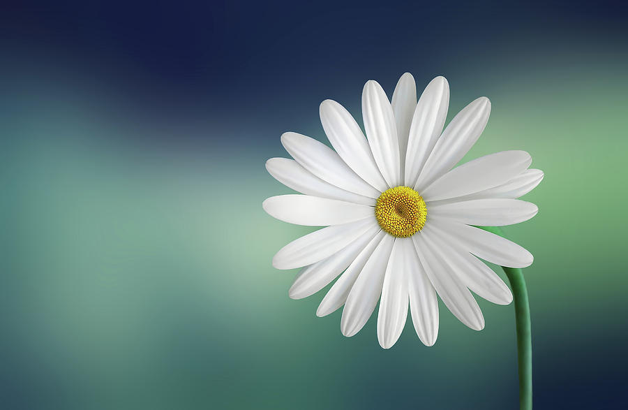 Flower Photograph - Flower by Bess Hamiti
