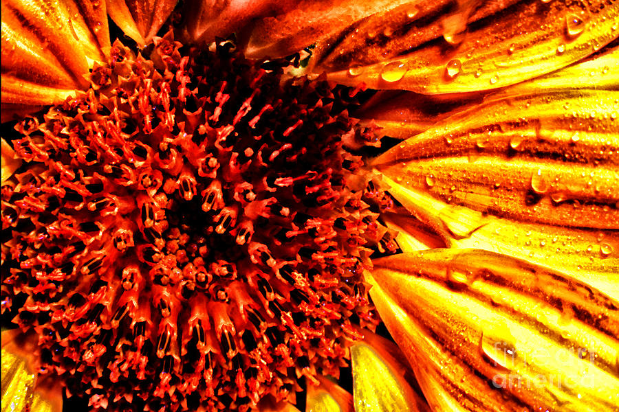 Rain Photograph - Flower Petals And Dewdrops by Thomas R Fletcher