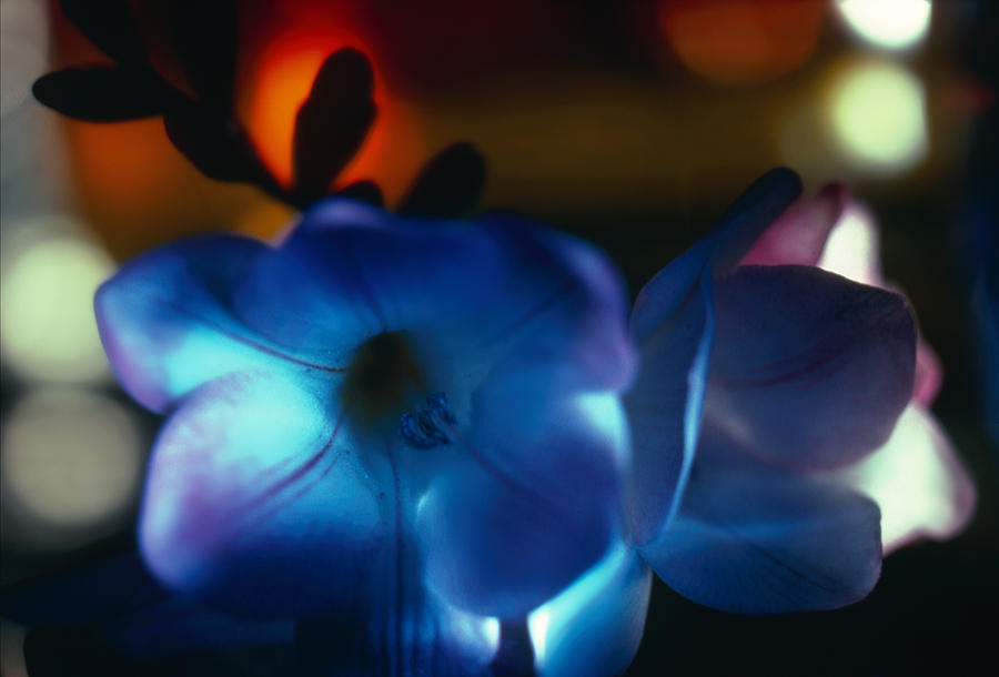 Botanical Photograph - Flowers  by Etti PALITZ
