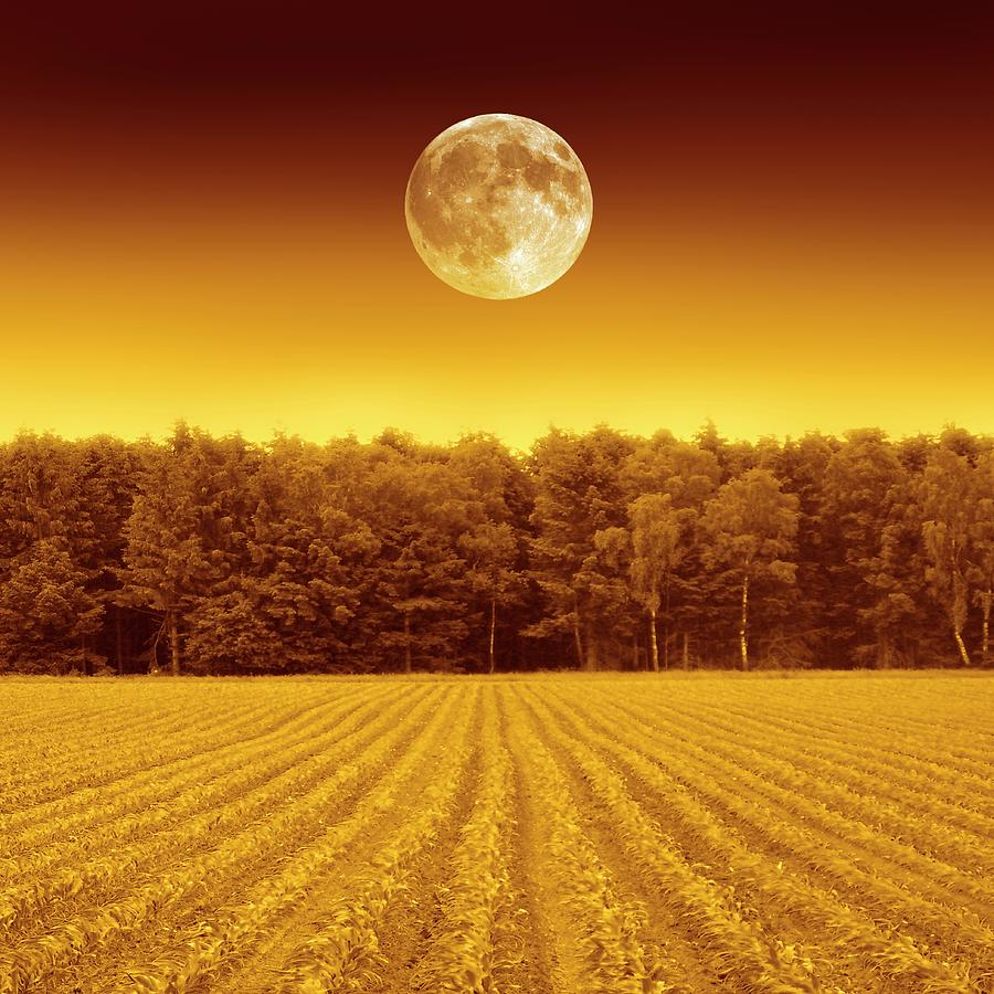 Nobody Photograph - Full Moon Over A Field by Detlev Van Ravenswaay