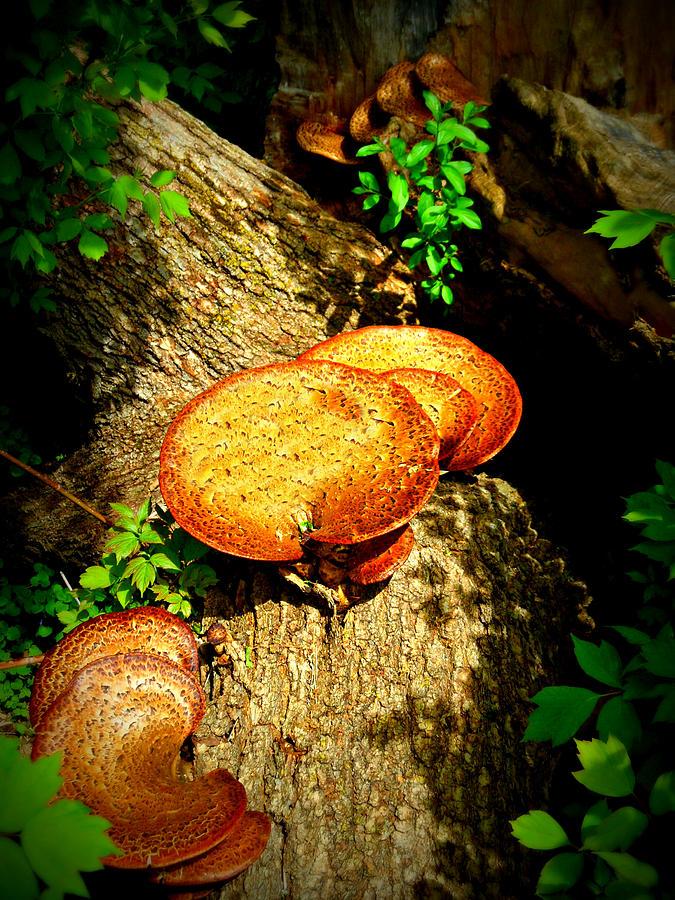 Mushrooms Photograph - Fung I by Cyryn Fyrcyd