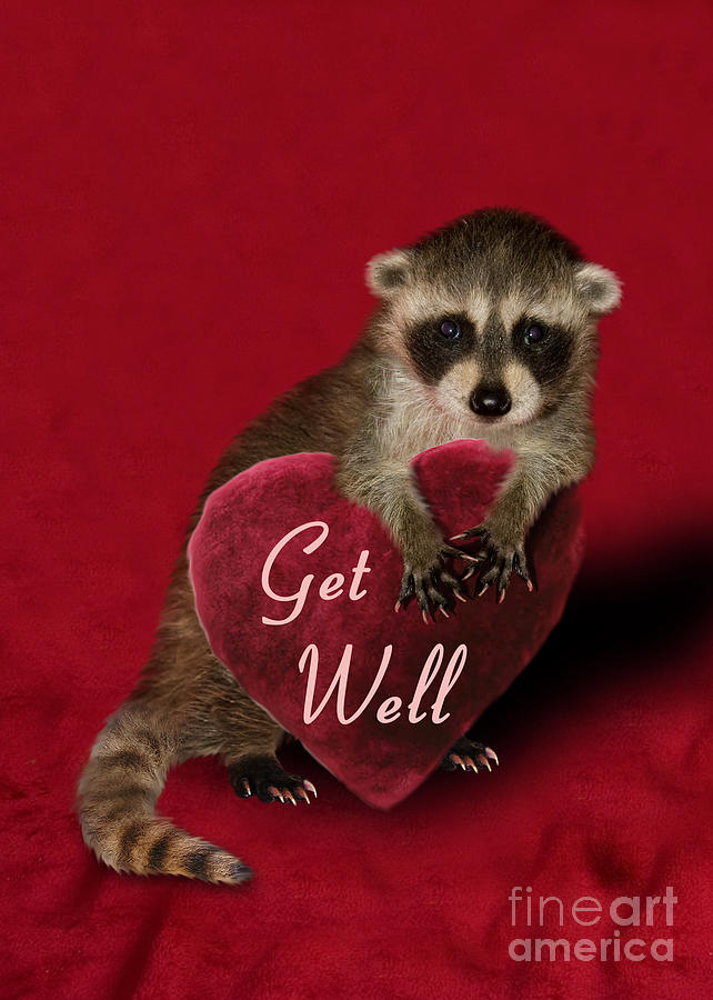 Greeting Photograph - Get Well Raccoon by Jeanette K
