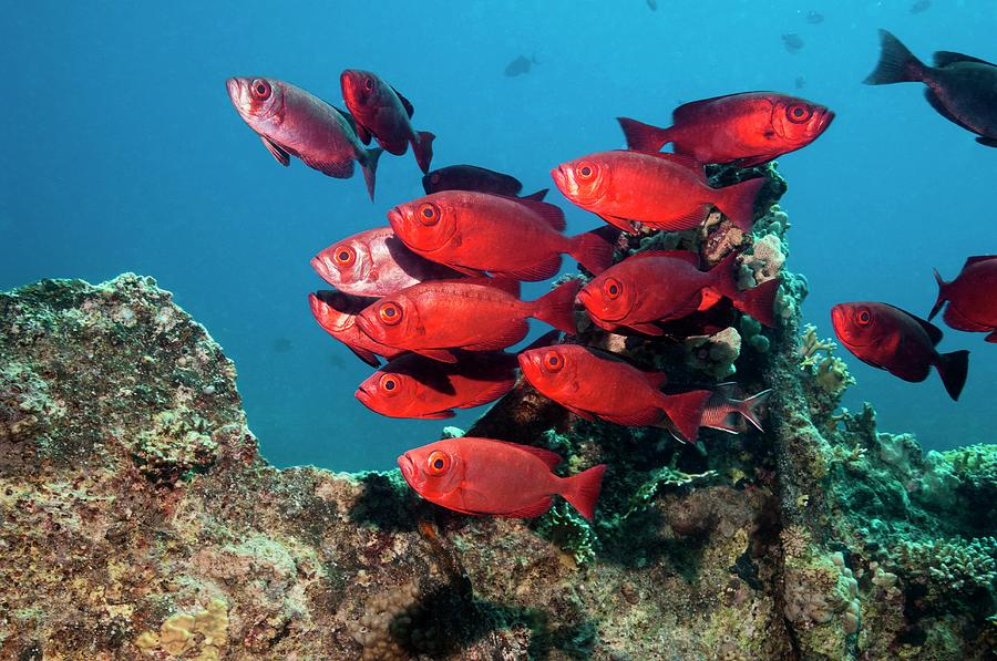 Nobody Photograph - Goggle Eyes On A Reef by Georgette Douwma