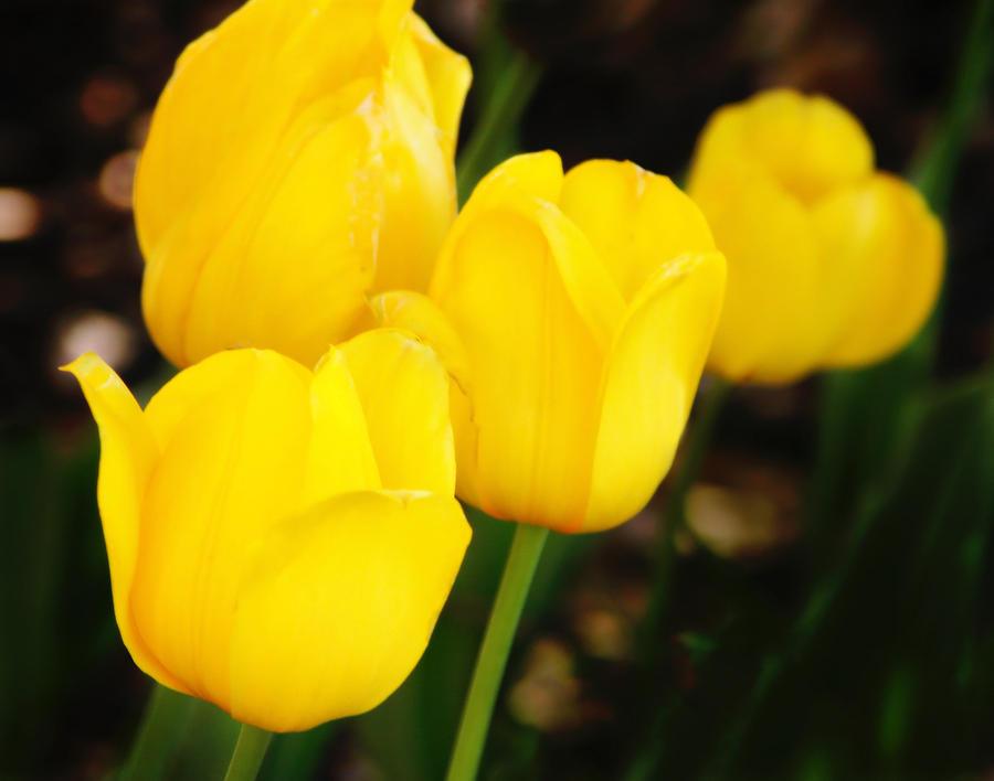 Flowers Photograph - Golden Cups by Joan Bertucci