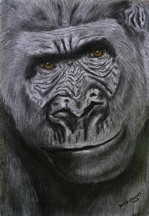 Gorilla Painting - Gorilla Portrait by David Hawkes