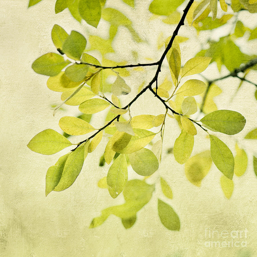 Foliage Photograph - Green Foliage Series by Priska Wettstein