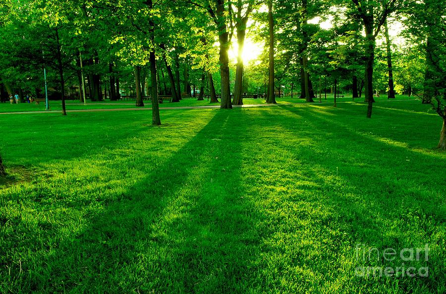 Green Park Photograph