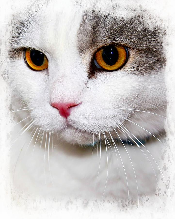 Cat Photograph - Handsome by Joyce Baldassarre