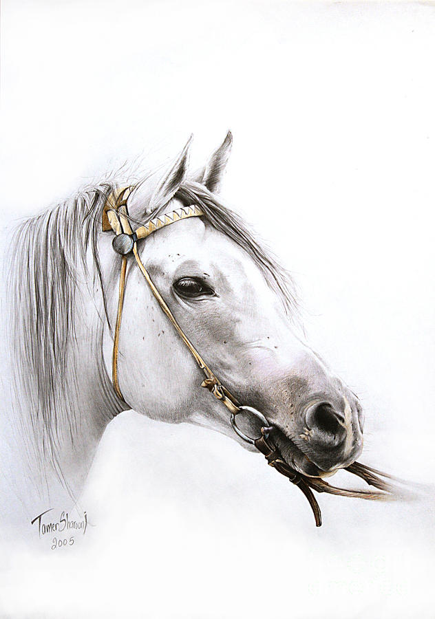 Horse Artwork Drawing - Horse Portrait 2 by Tamer and Cindy Elsharouni