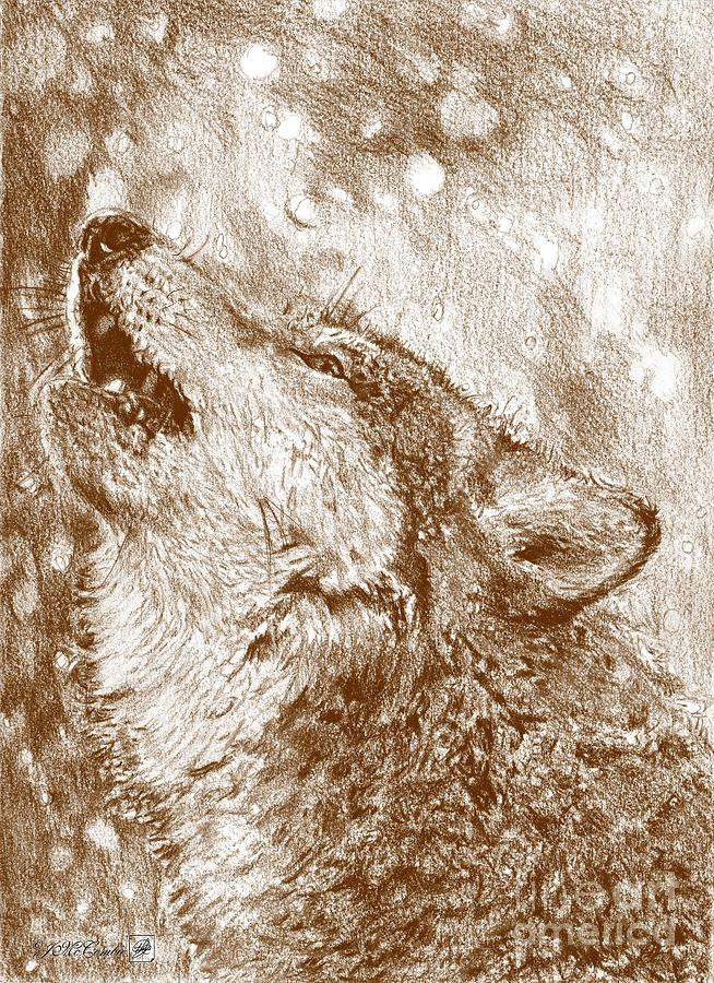Gray Wolf Howling Drawing Howling Gray Wolf Draw...