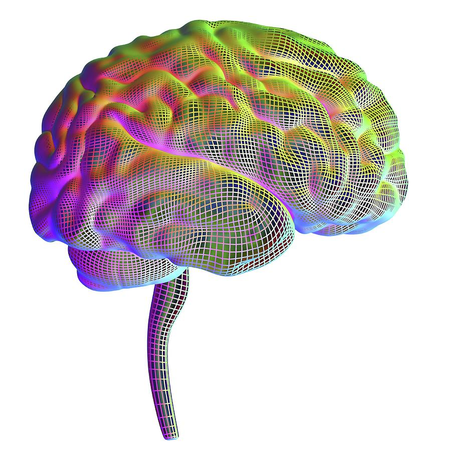 3 Dimensional Photograph - Human Brain by Alfred Pasieka