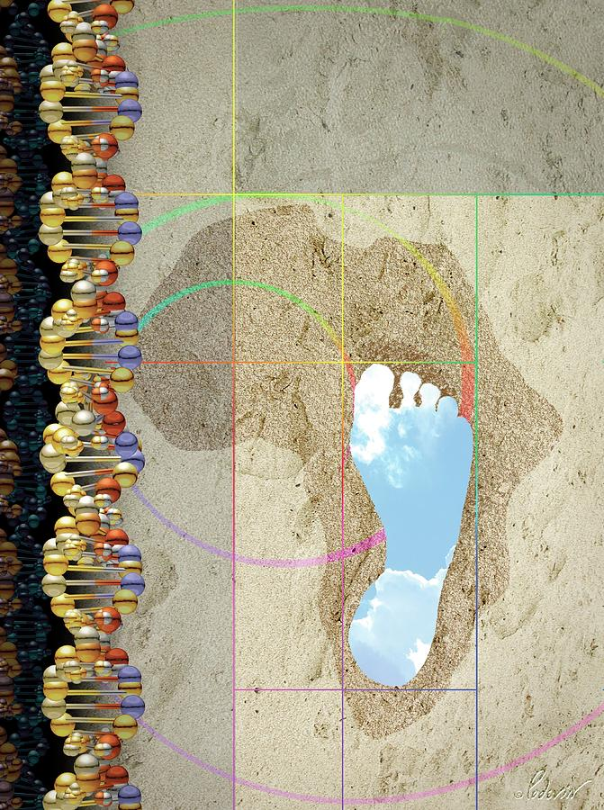 Dna Photograph - Human Evolution by Jean-francois Podevin/science Photo Library