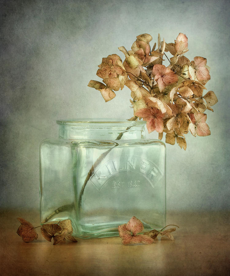 Still Life Photograph - Hydrangea by Mandy Disher