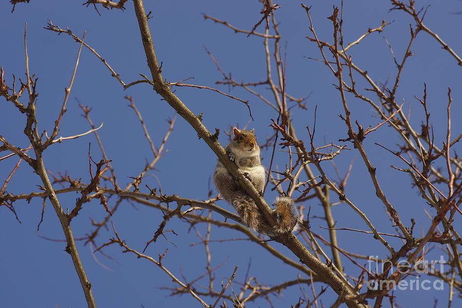 Squirrel Photograph - I See You by Jeffery L Bowers